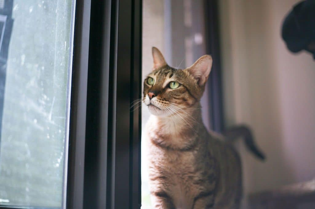 Hôtel pour chats : la garde de luxe pour animaux